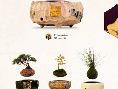 Air Bonsai: парящие в магнитном поле растения от японской компании Hoshinchu