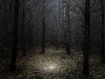 Элли Дэвис усыпала английский лес звездами