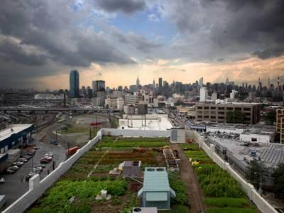 На одной из крыш в Нью-Йорке создали урбанистическую ферму