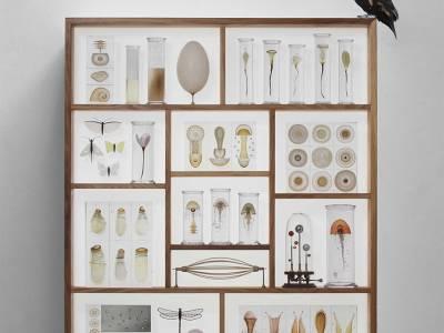 Коллекция морских существ от Steffen Dam