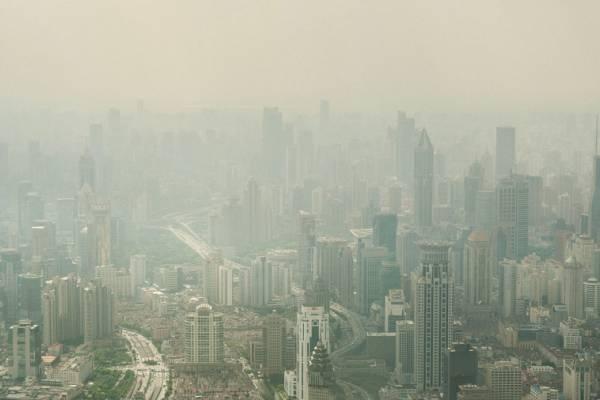 В Китае для борьбы с выбросами углерода высадили 66 млрд деревьев