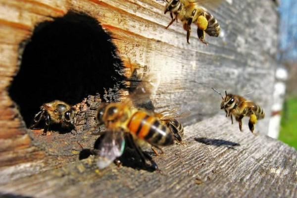 Экология урбана и проблема пчел